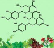 Chuyên luận về Proanthocyanidin